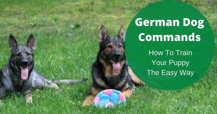 German Dog Commands German Shepherd Things For My German