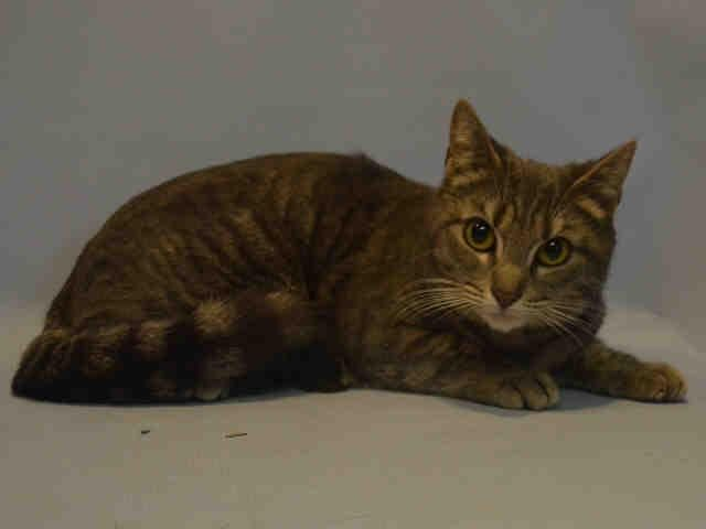 KC A1063720 Cat adoption, Pets, Cats and kittens