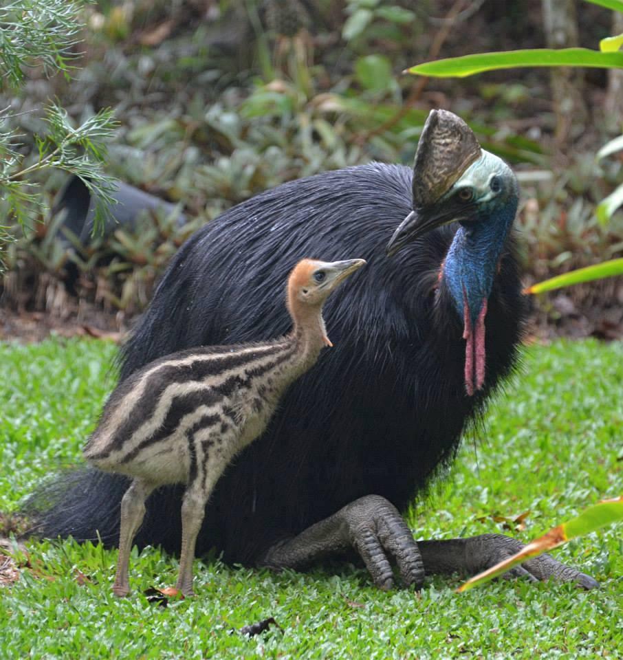 Aves Insectos Animales En La Naturaleza Cerrado Pagina 10 En 2020 Aves No Voladoras Aves Aves De Compania