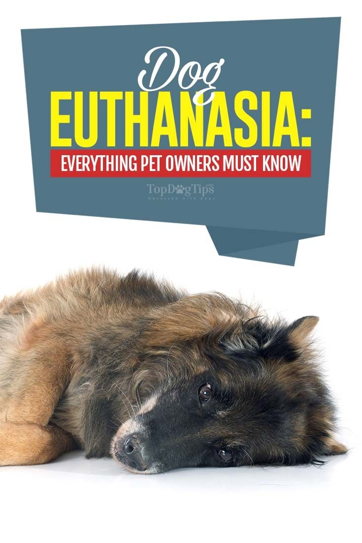 Euthanizing your dog what to expect dog last day pet