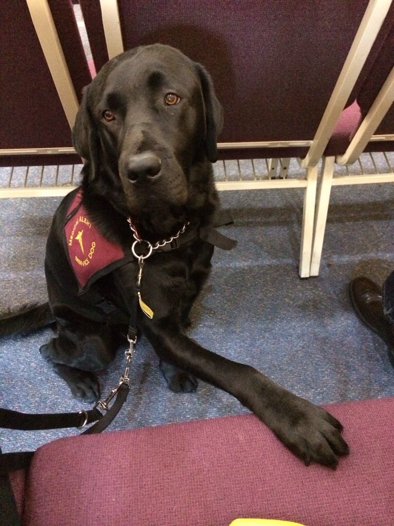 Darwin the diabetic alert dog blog Dogs, Working dogs