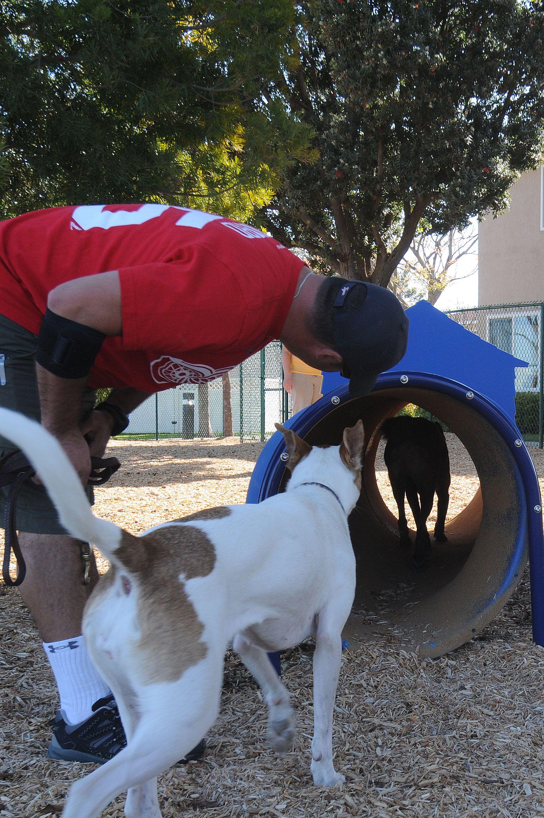 Bow Wow Barrel Bow Wow Custom Dog Houses Custom Dog