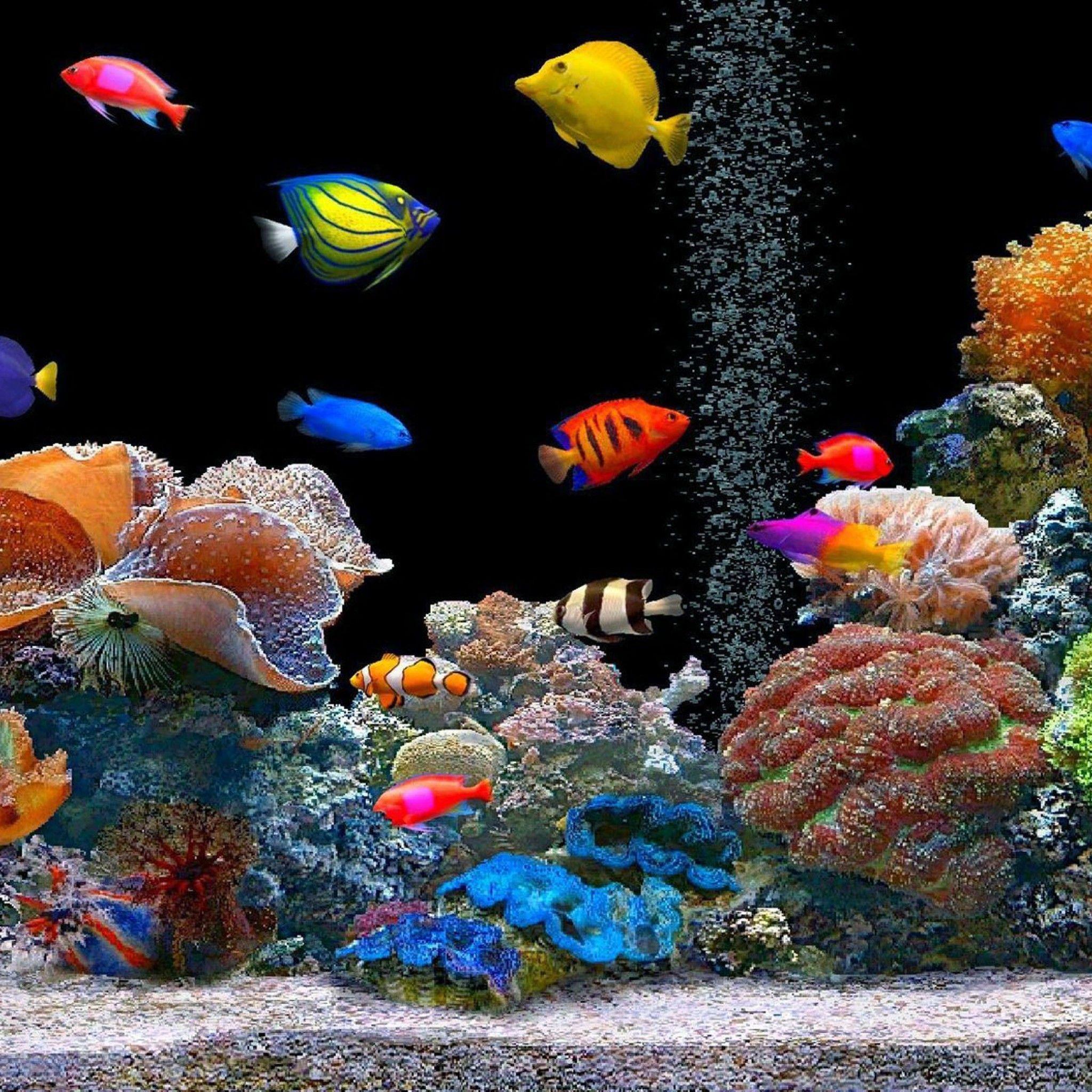 人気299位 宝石のような魚たち Ipad タブレット壁紙ギャラリー 海水水族館 美しい魚 魚