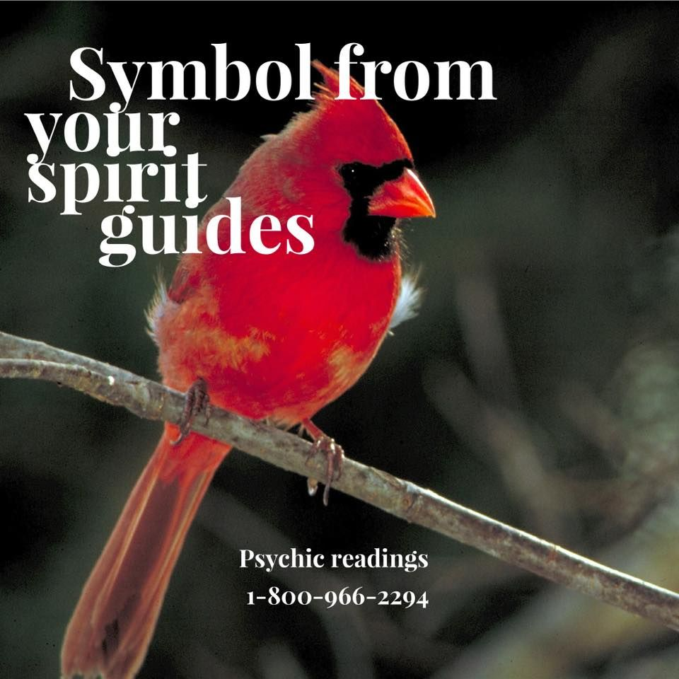 A cardinal is thought to be a psychic symbol from your spirit a cardinal is thought to be a psychic symbol from your spirit guides many think buycottarizona Images