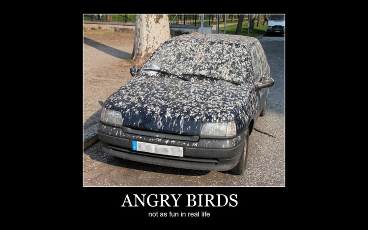 ANGRY BIRDS IN THE AREA. GET YOUR GARAGE FIXED TODAY WITH