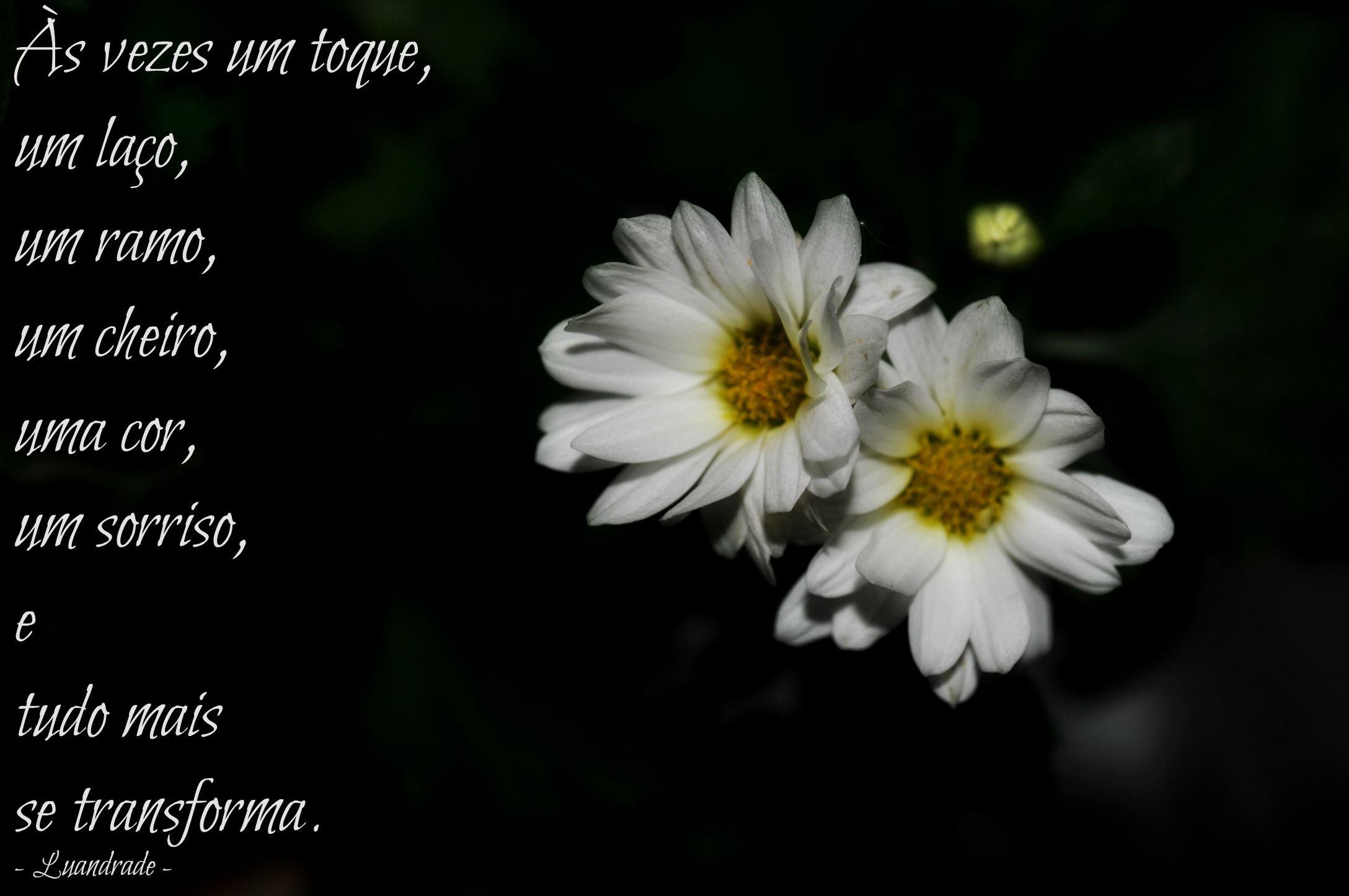 Às vezes um toque, um laço, um ramo, um cheiro, uma cor, um sorriso, e tudo mais se transforma. - Luandrade -