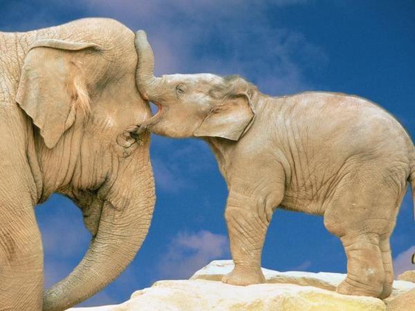 Elefante, madre, hijos, naturaleza, crias