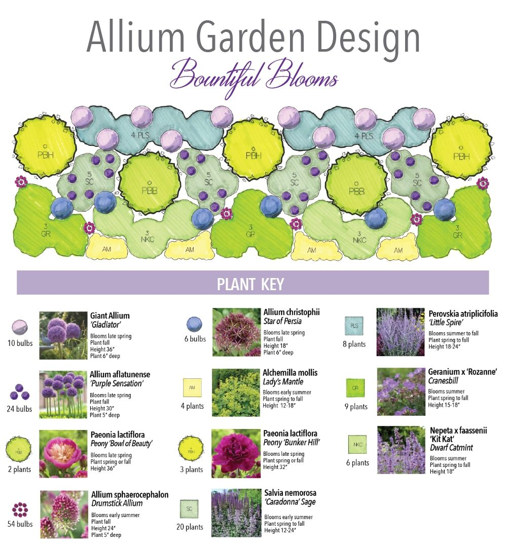 Bulb Garden Layout My New Plans