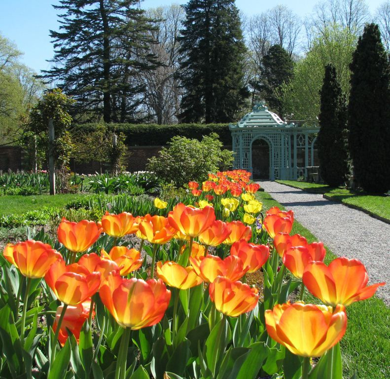 Westbury Gardens Rose Garden: Tulips In April In The Walled Garden