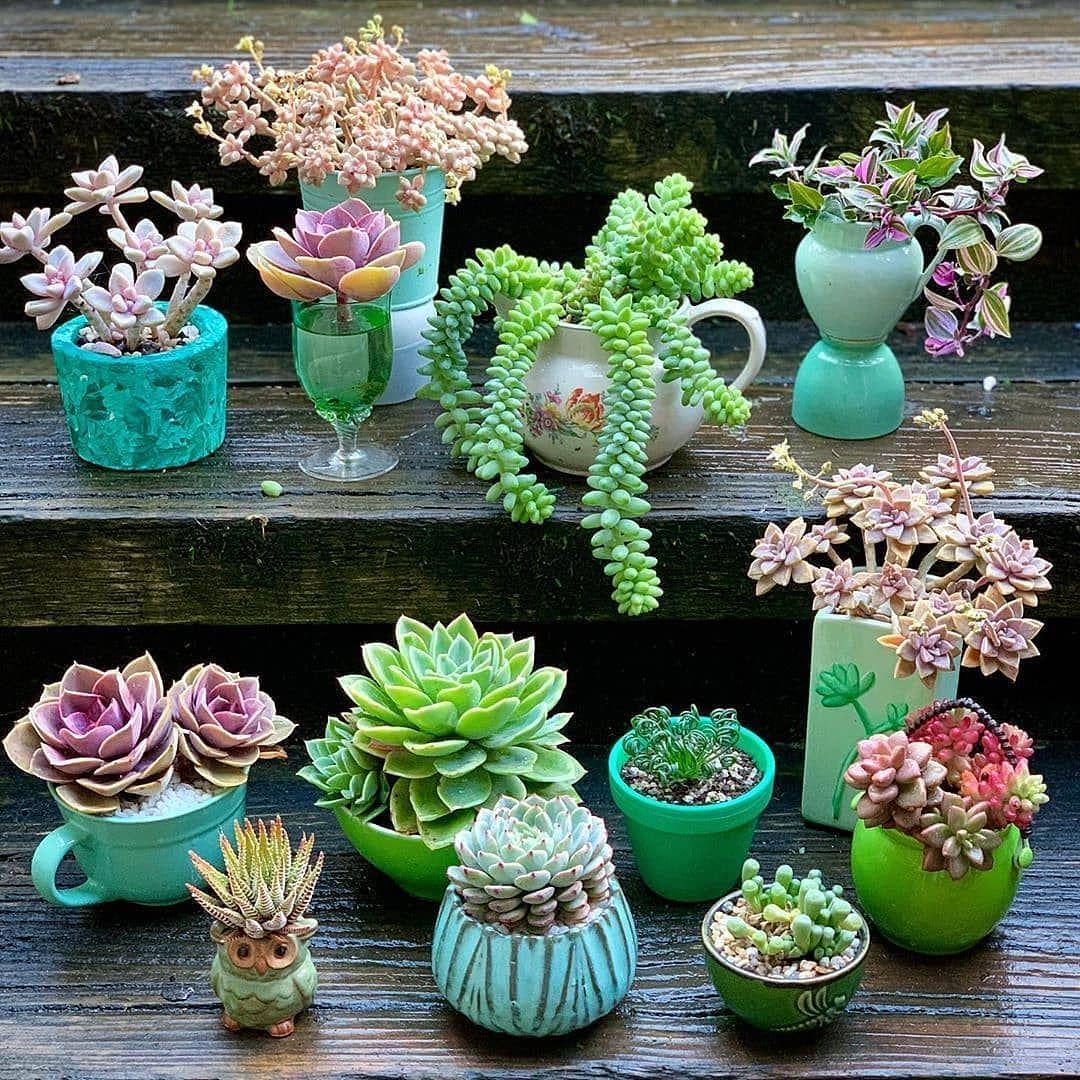 succulents-garden