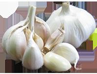 Garlic Growing Information Growing Garlic Garlic 400 x 300
