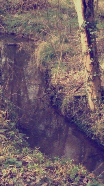 A Forrest walk