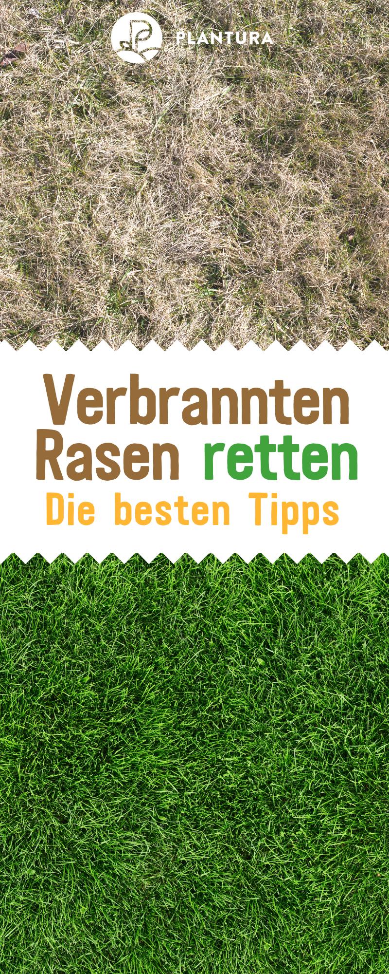 Rasen Im Herbst Dungen Wann Wie Womit Plantura Rasen Rasen Dungen Rasenpflege