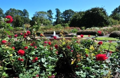 Memphis Botanic Gardens - My Big Backyard | Memphis ...