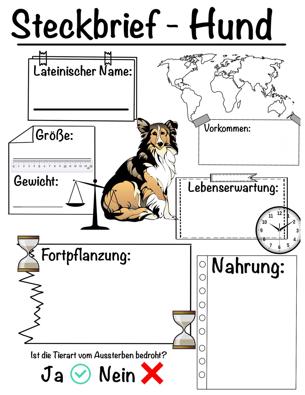 Steckbrief Hund Unterrichtsmaterial Im Fach Sachunterricht In 2020 Steckbrief Brief Unterrichtsmaterial