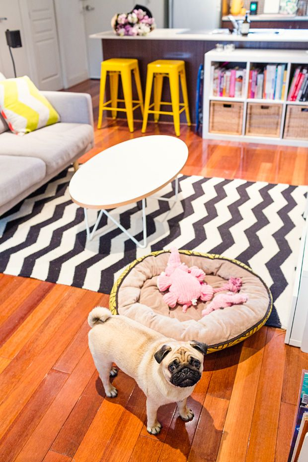 Pet Friendly Home Tour Madeleine Burke & Wilma Pet