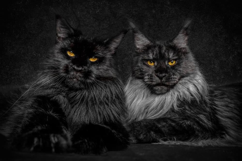 Black Sisters by Robert Sijka on 500px