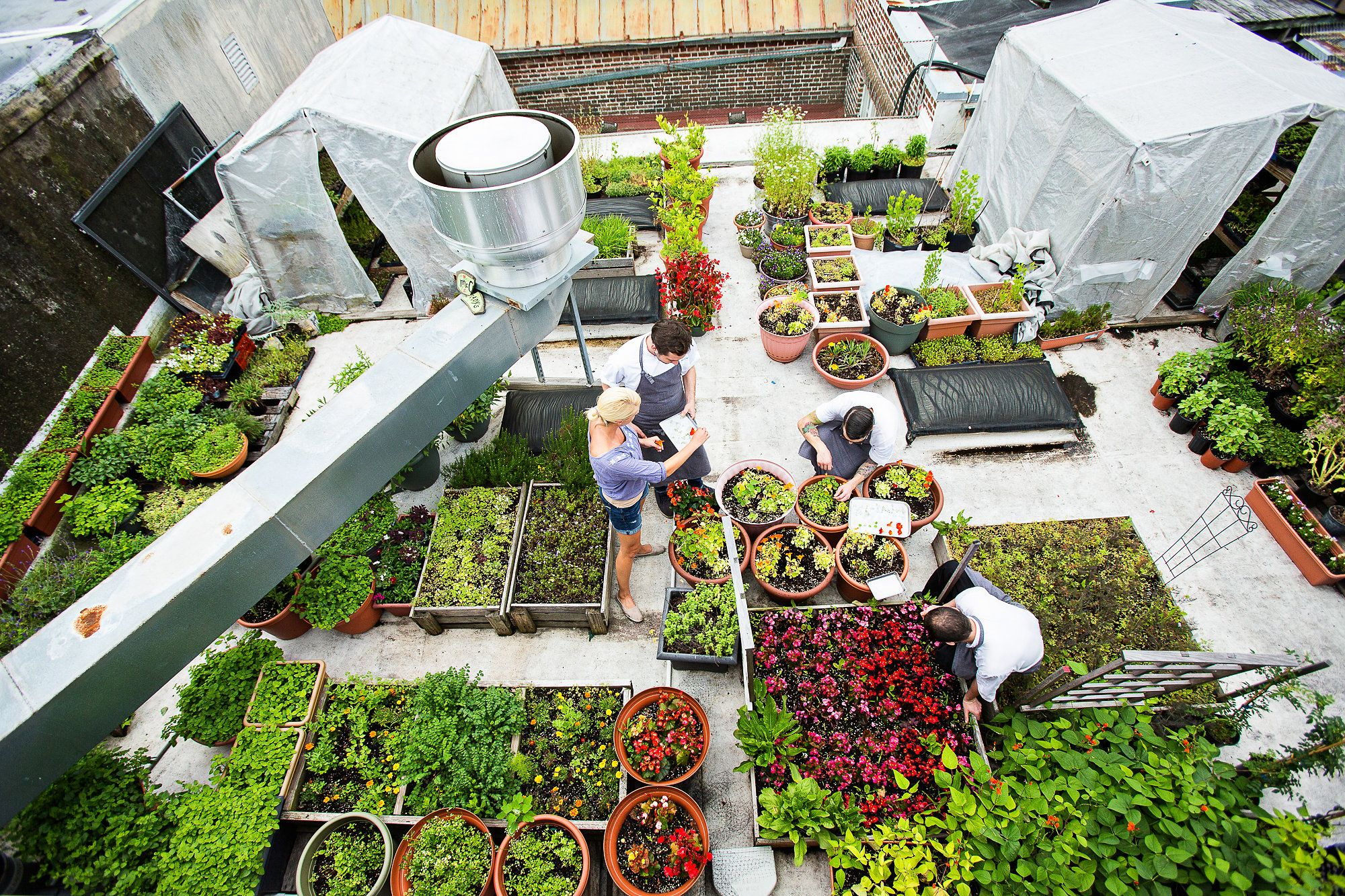 birds eye view of the roof garden - Garden Design Birds Eye View