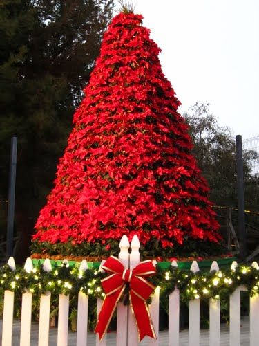Christmas Poinsetta tree. I have been trying to pin Xmas trees around the world with lights on the tree on my board.  This tree is just stunning to I need to include it.