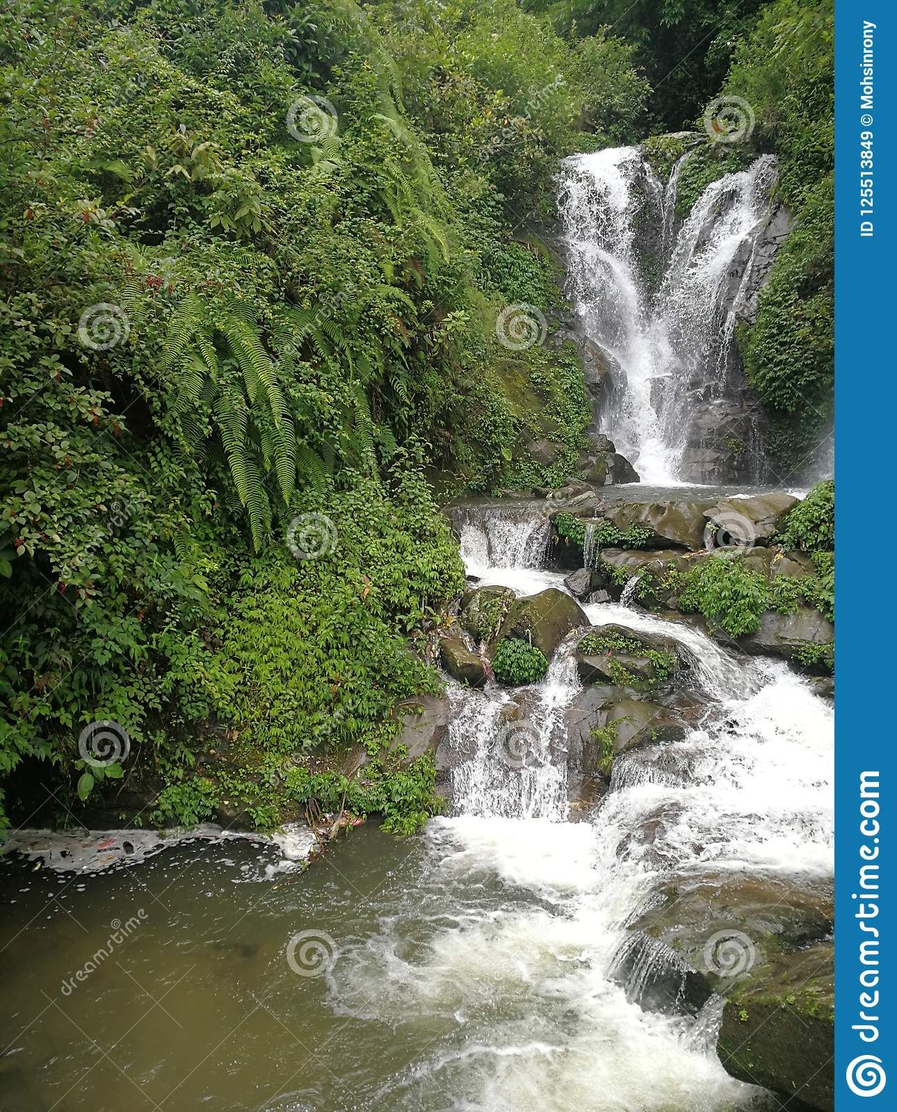Photo About Forest River Mountain Landscape Image Of Landscape Fountain River 125513849 Landscaping Images Landscape Mountain Landscape