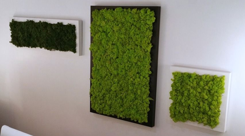 Moss Frames - MOSS WALLS from the ECO FLOOR STORE in Surrey, B.C. ...