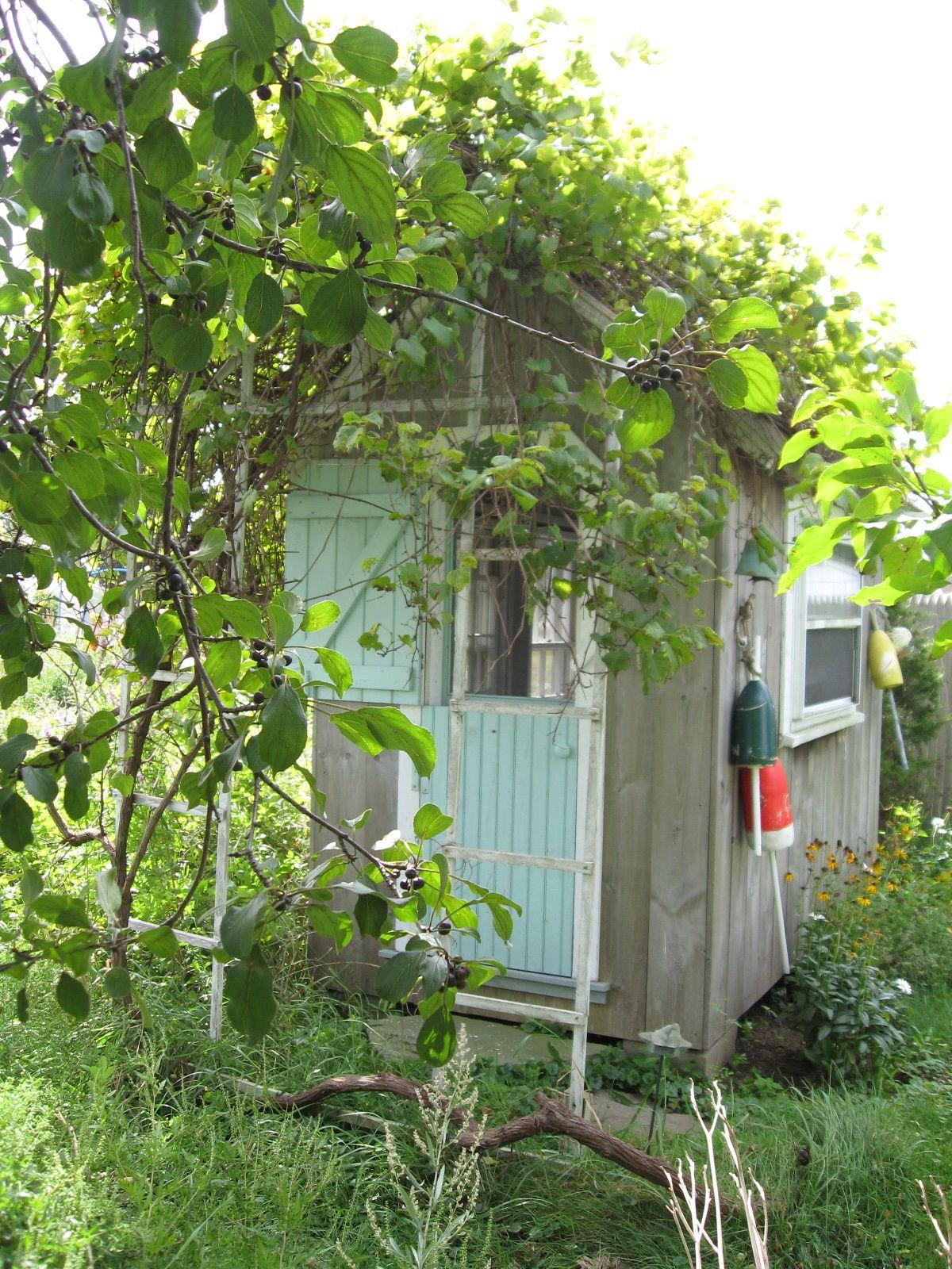Garden folly with grape vine all grown in designed and for Garden folly designs
