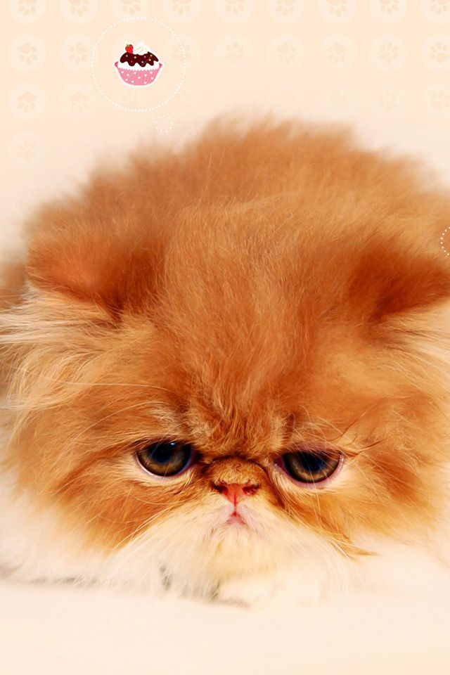 Sticky Paws For Cats And Cat Gallery Take A Quick Break Kittens Cutest Persian Kittens Fluffy Cat