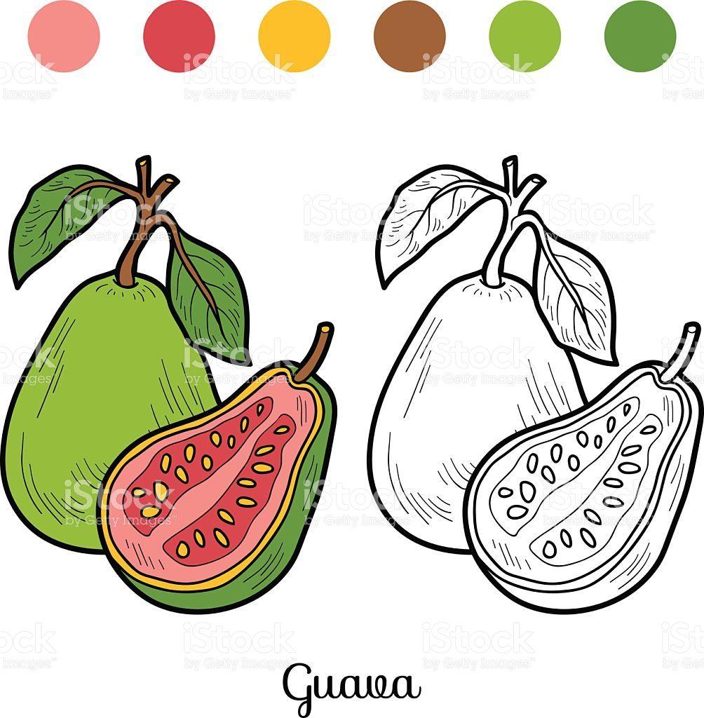 fruits and vegetables | Векторные иллюстрации, Фрукты ...