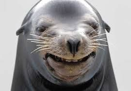 Sorrindo Lustige Tiergesichter Lachende Tiere Lachelnde Tiere