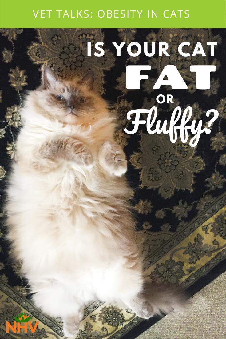 Vet Talks Obesity In Cats In 2020 Overweight Pet Vets Pet Parent