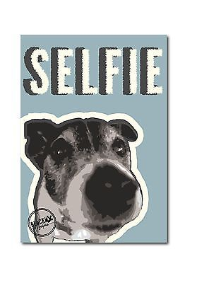 Jack Russell Selfie Blue