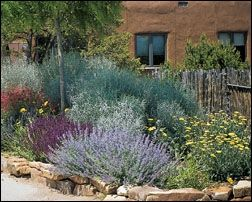Xeriscape Landscape - Easy To Maintain & Little Water Needed