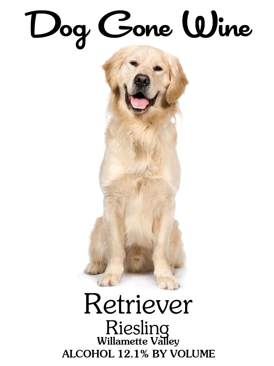 Retriever Riesling Dog Fence Pets Dogs