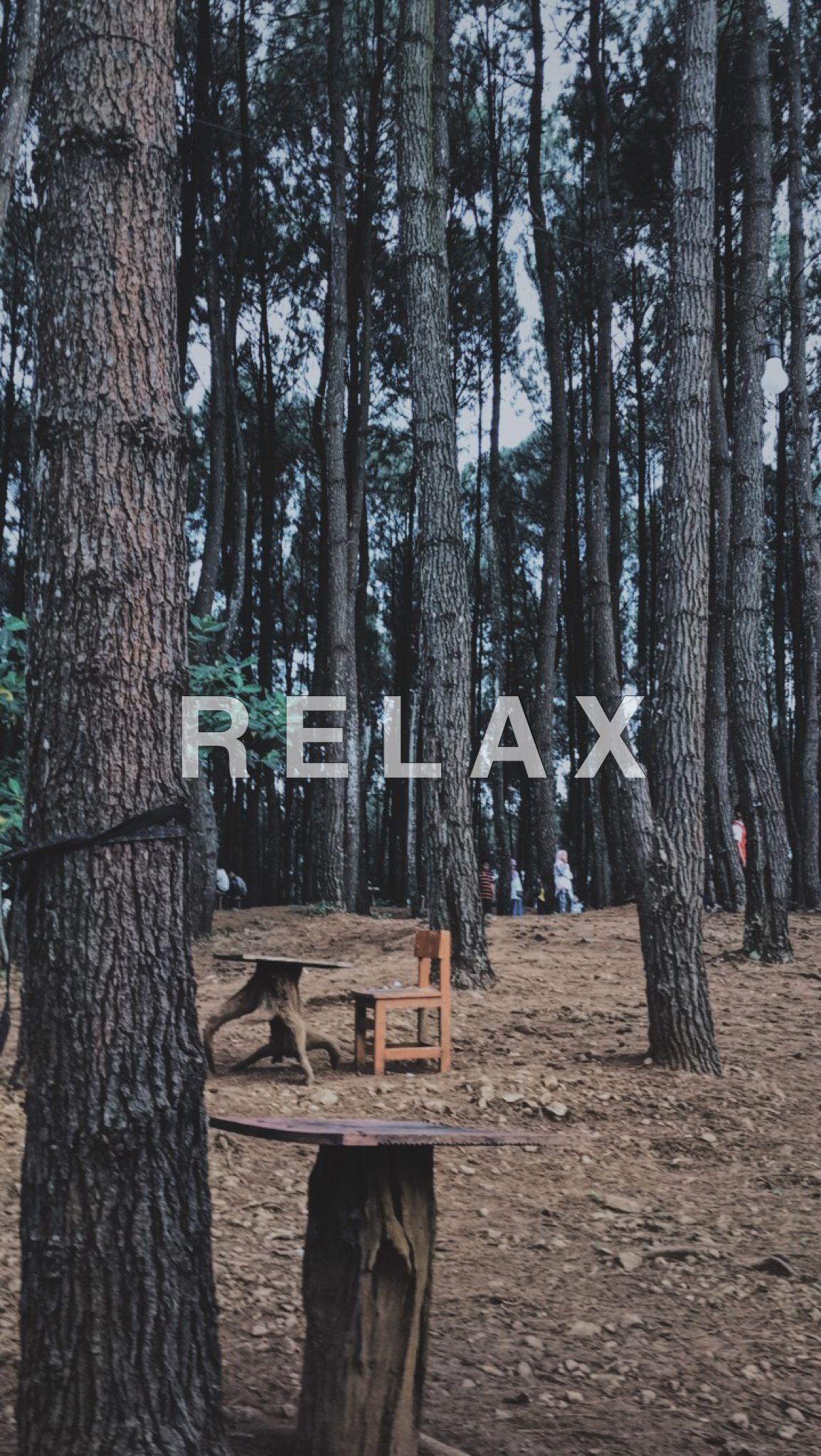 Hutan Pinus Vscocam Editing Fotografi Alam Fotografi Perjalanan Pemandangan