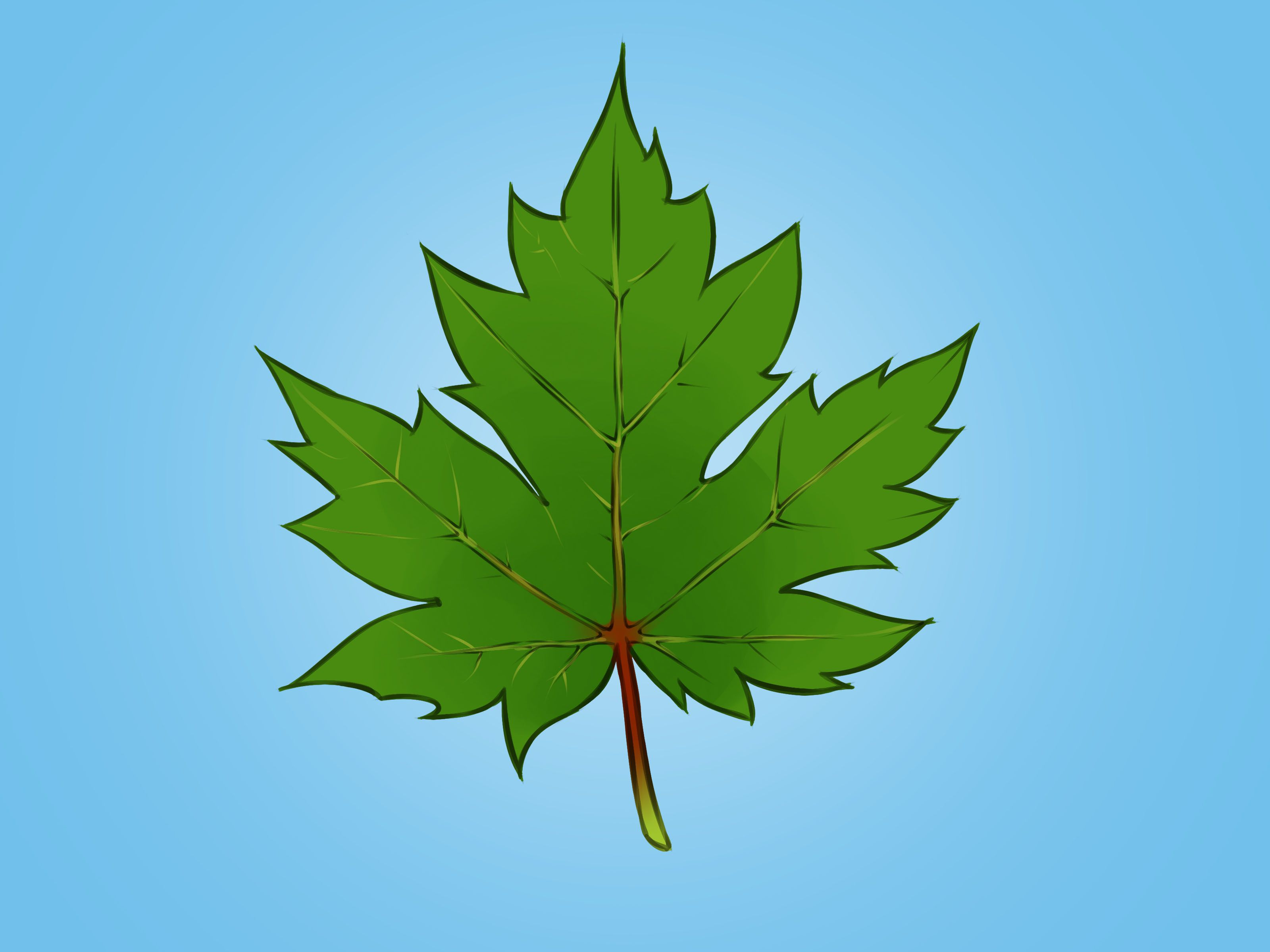 How To Draw A Maple Leaf Drawings Maple Leaf Plant Leaves