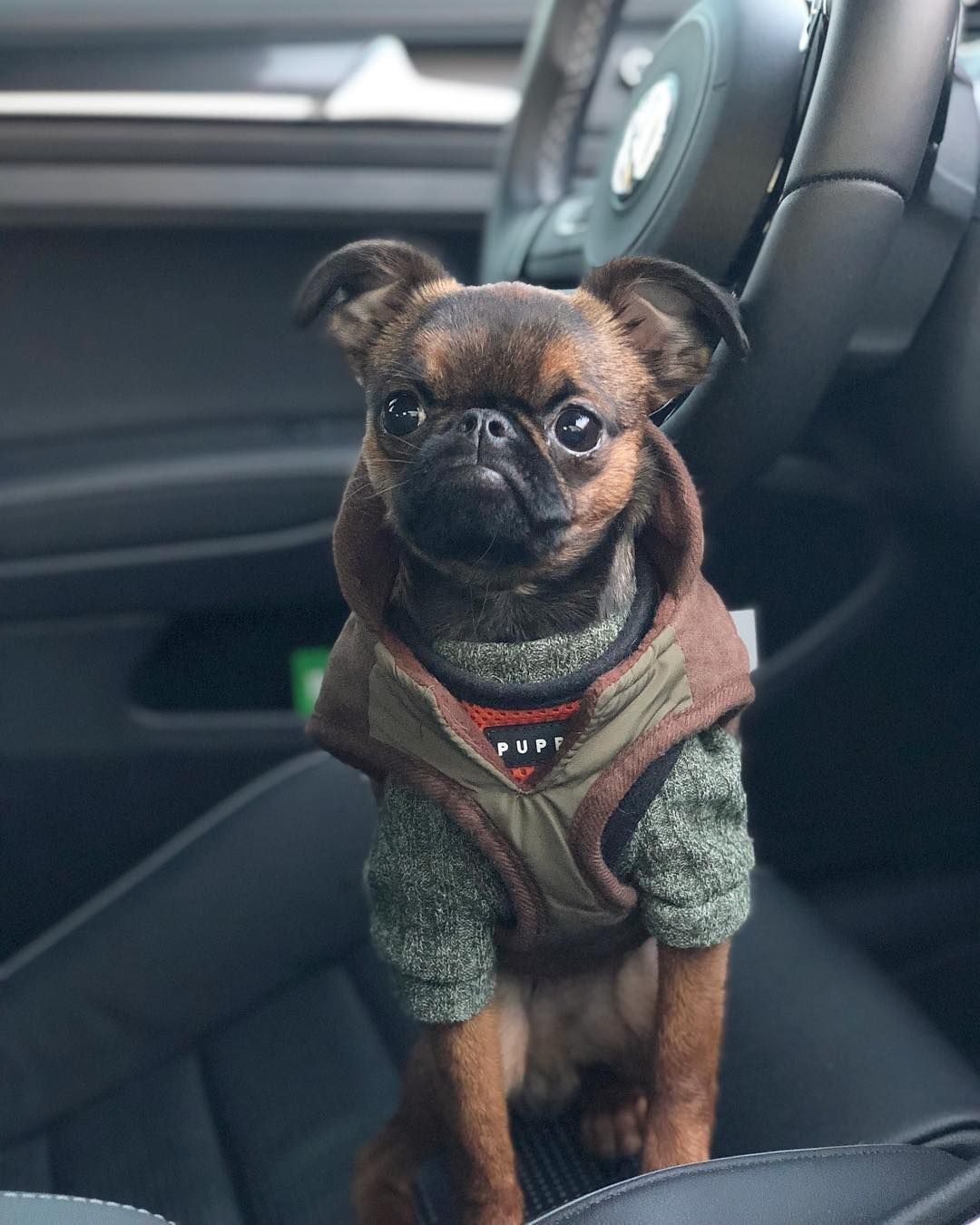 """Walter on Instagram """"Get in, guys. I'm driving. 🏎"""" Cute"""