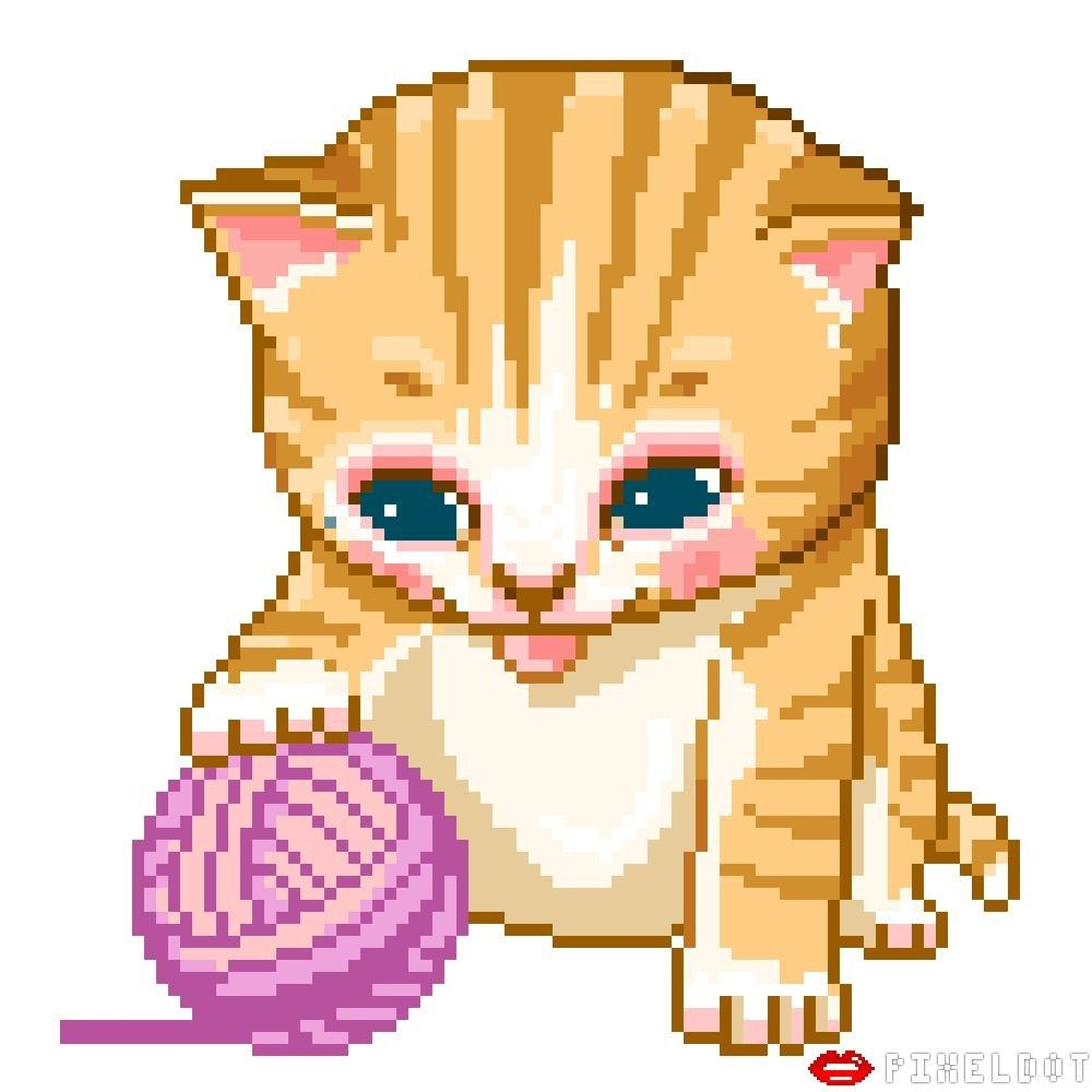 живые картинки для презентаций кошки