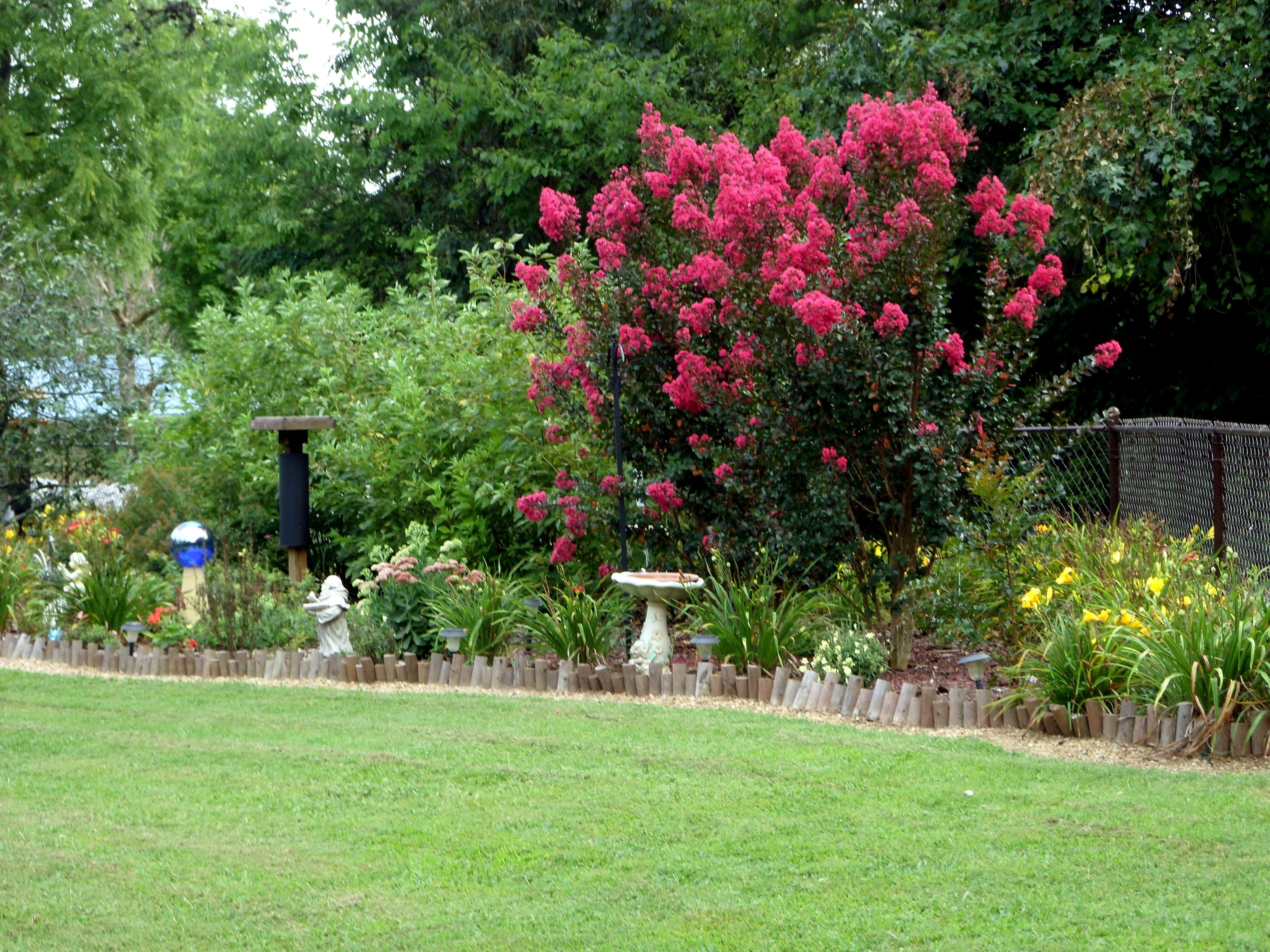 Crepe Myrtle Tree-very pretty color - reminds of the bushes that ...