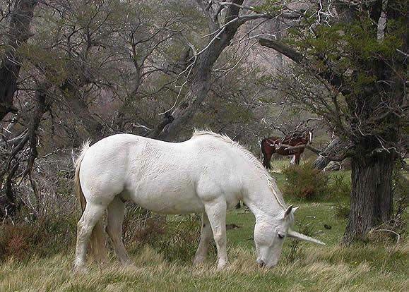 Imagenes De Unicornios - Buscar Con Google