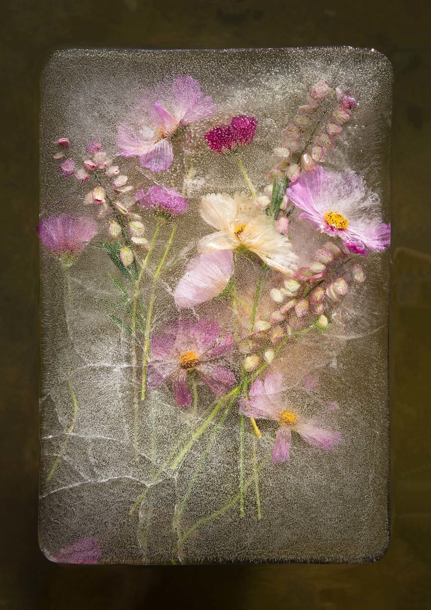 Artists invigorate the legacy of flower photography by encasing colorful blooms in blocks of ice.