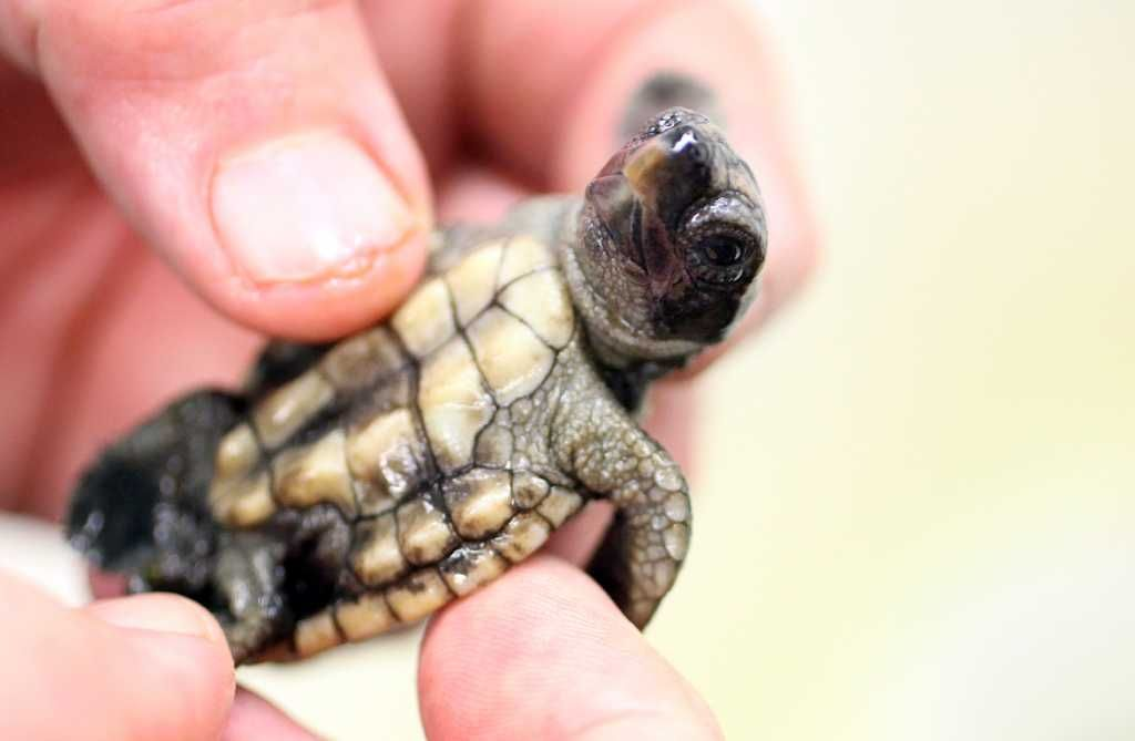 Zoo vet makes house calls for sick turtles