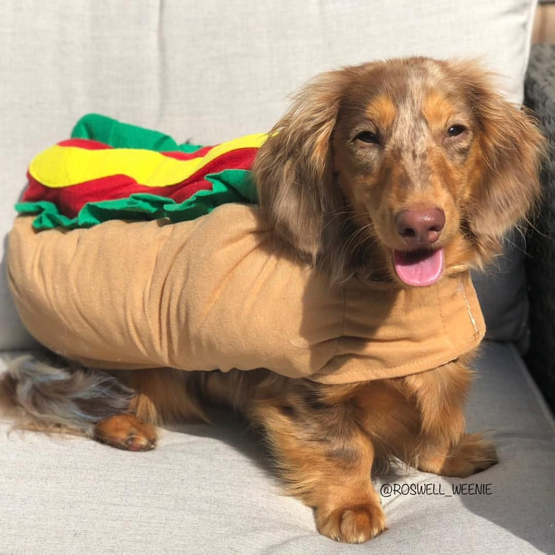 Happy Nationalhotdogday From Us To You Go Grab Yourself A Dog Roswell Weenie Weenie Dogs Pet Supplies