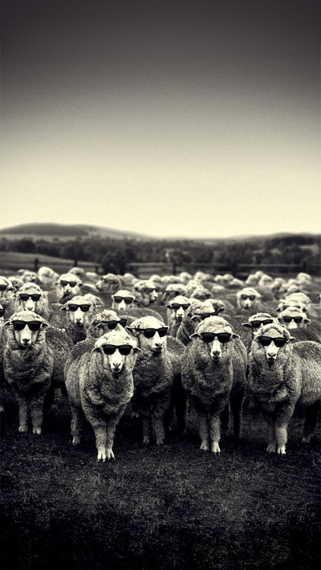Animals Stylish Sheep Black White Village Cool Dark Glasses Hd Iphone  Wallpaper