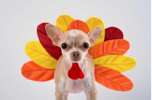 10 Adorable Dogs Dressed Up For Thanksgiving Dog Thanksgiving Dog Thanksgiving Costume Pet Costumes