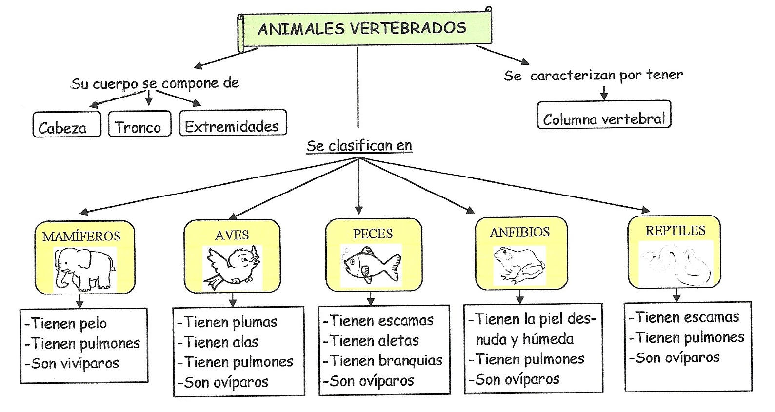 El blog de la maestra Berta: LOS ANIMALES.