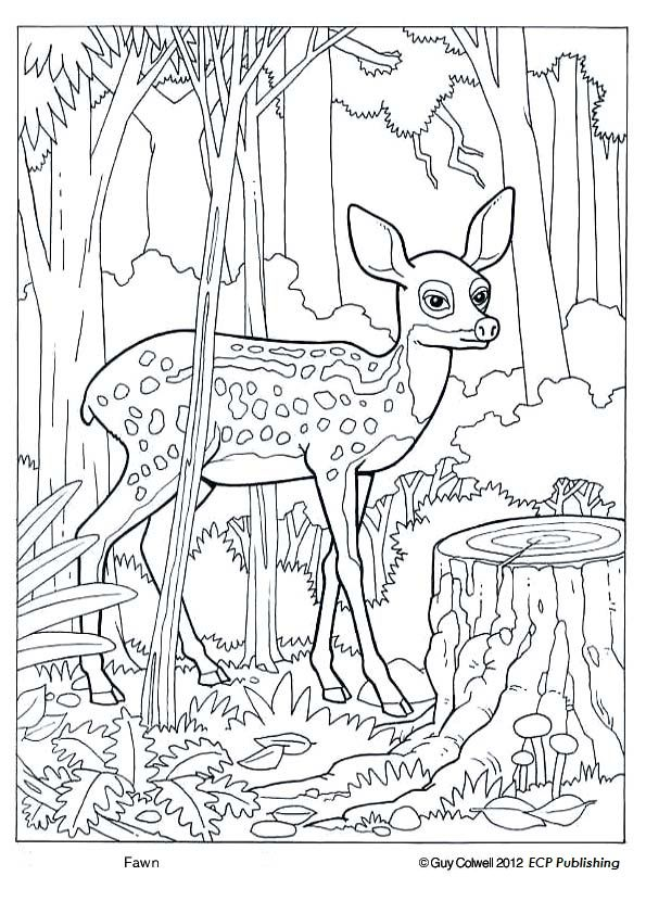 Fawn Coloring Deer Coloring Forest Animals Deer Coloring Pages Animal Coloring Books Animal Coloring Pages
