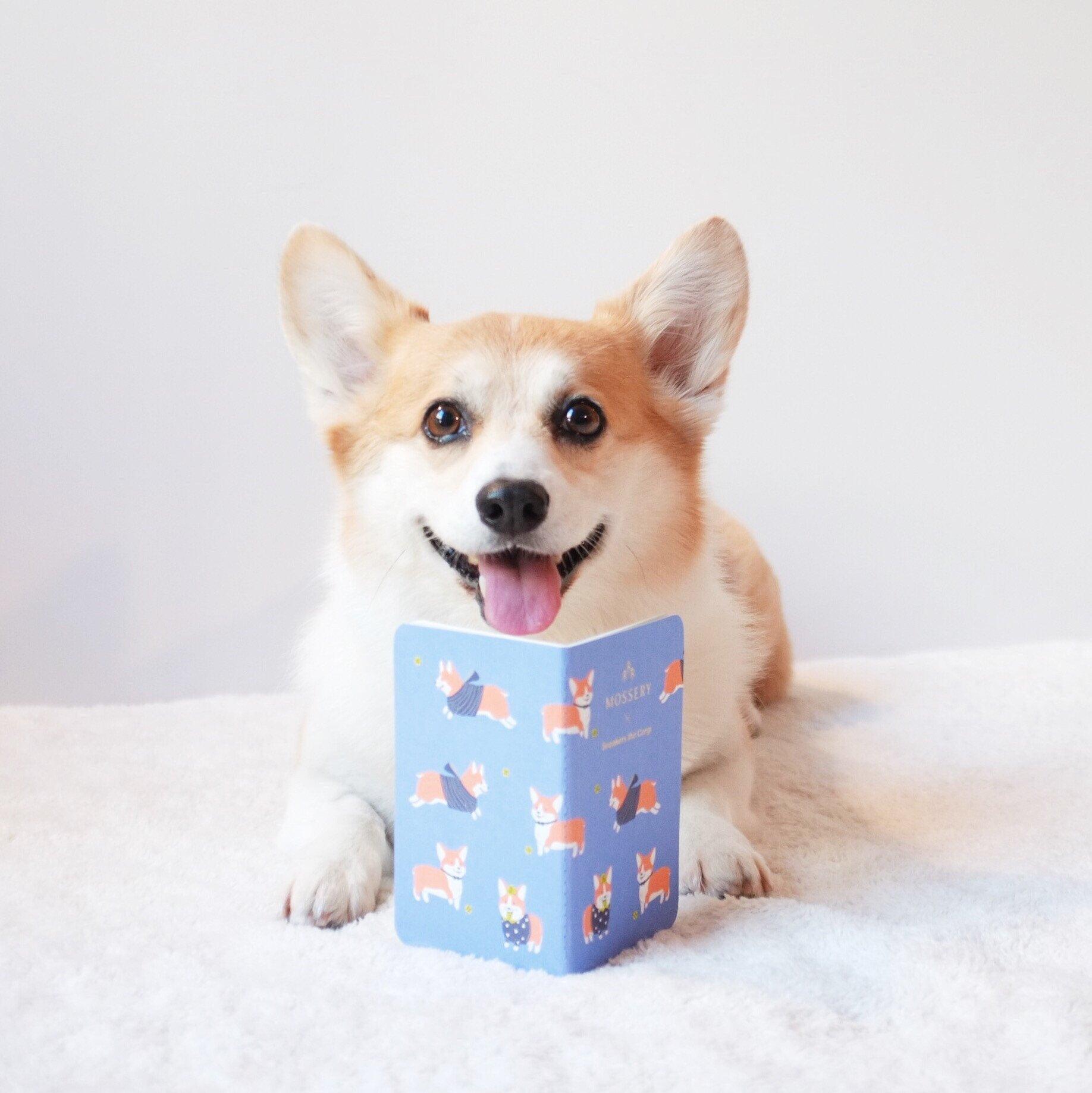 Sneakers The Corgi Pocket Notebook Corgi Cute Corgi Corgi Dog