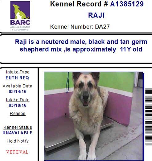 03 11 16 Houston Save Lives Is Our Mission Urgent Help Raji Who Was Owner Surrender And Also Owner Requested Eu For Him Let S Help To Adopt 2 Dogs