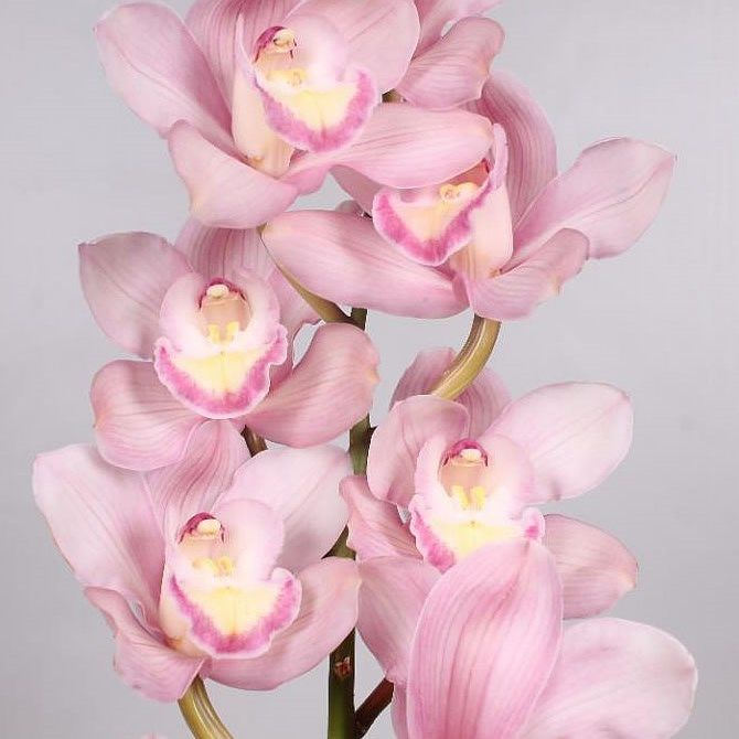 Cymbidium Orchid Aquarella Are Perfect For Wedding Flower Arrangements They Create A Na White Wedding Flowers Bouquet Cymbidium Orchids Spring Wedding Flowers