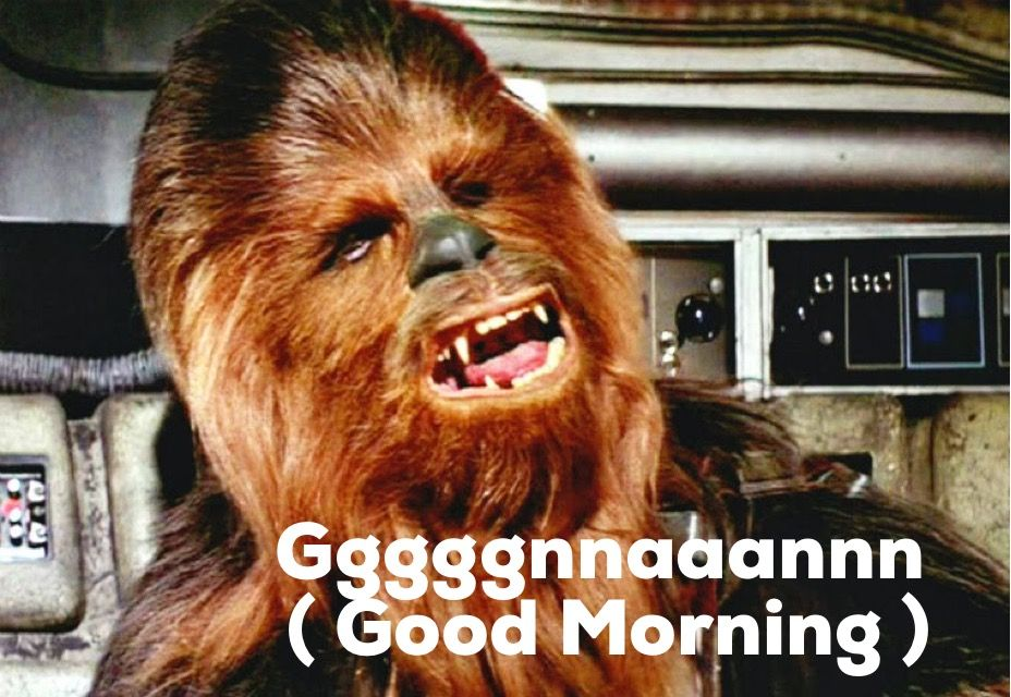 Funny Memes For The Morning : Chewbacca says good morning : star wars rogue one fan fans cosplay